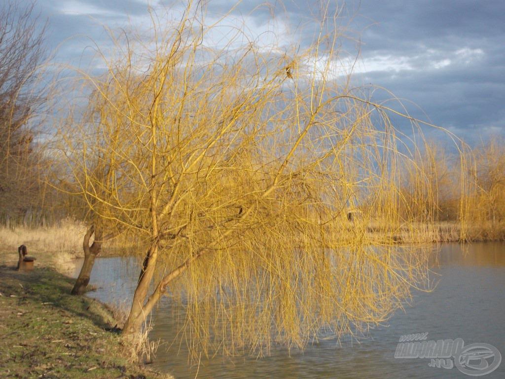 Nagyon sok fa veszi körbe a tavakat, egyértelmű jele annak, hogy egykor ez egy természetes vízpart volt