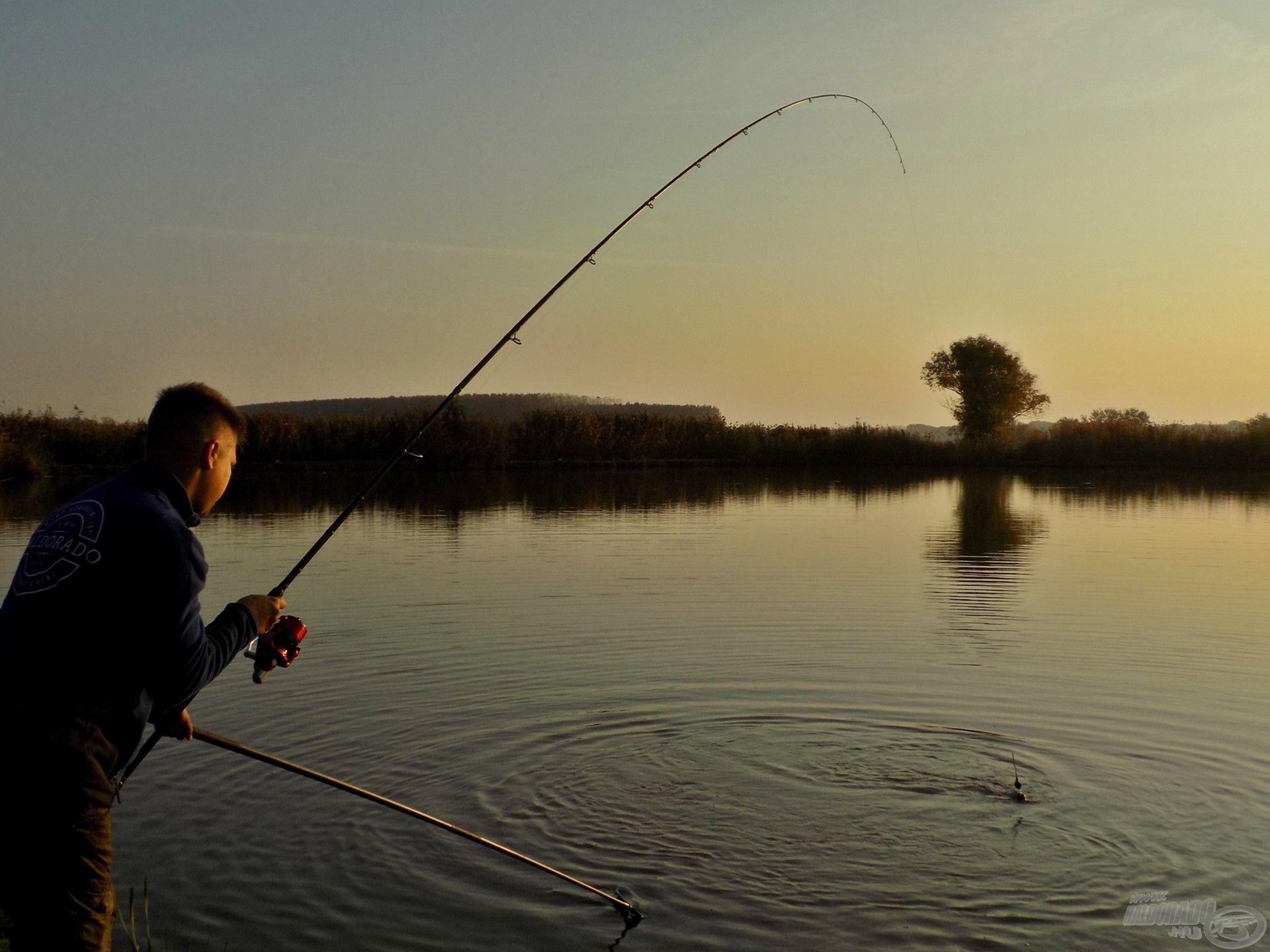 A megakasztott hal erőteljes ellenállása ellenére hamarosan szákban tudhattam az első Millér-tavi pontyomat!