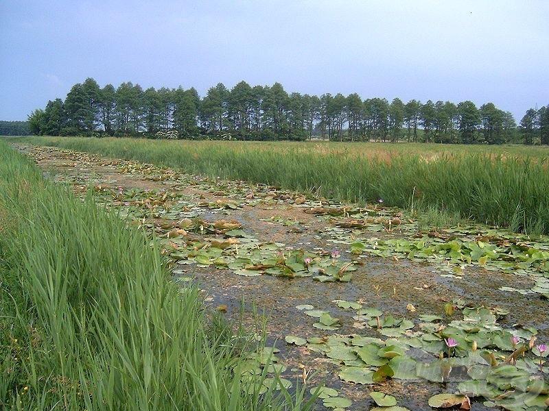 A csatorna a melegebb időszakokban a sűrű növényzet miatt tulajdonképpen meghorgászhatatlan (Forrás: wikipedia hu)