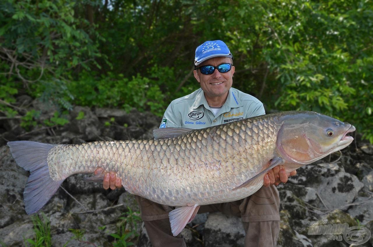 … egy még nagyobb (méternél nagyobb törzshosszúságú) 18,5 kg-os fajtársa követett. Hát, ilyen halak élnek a vén Dunában!