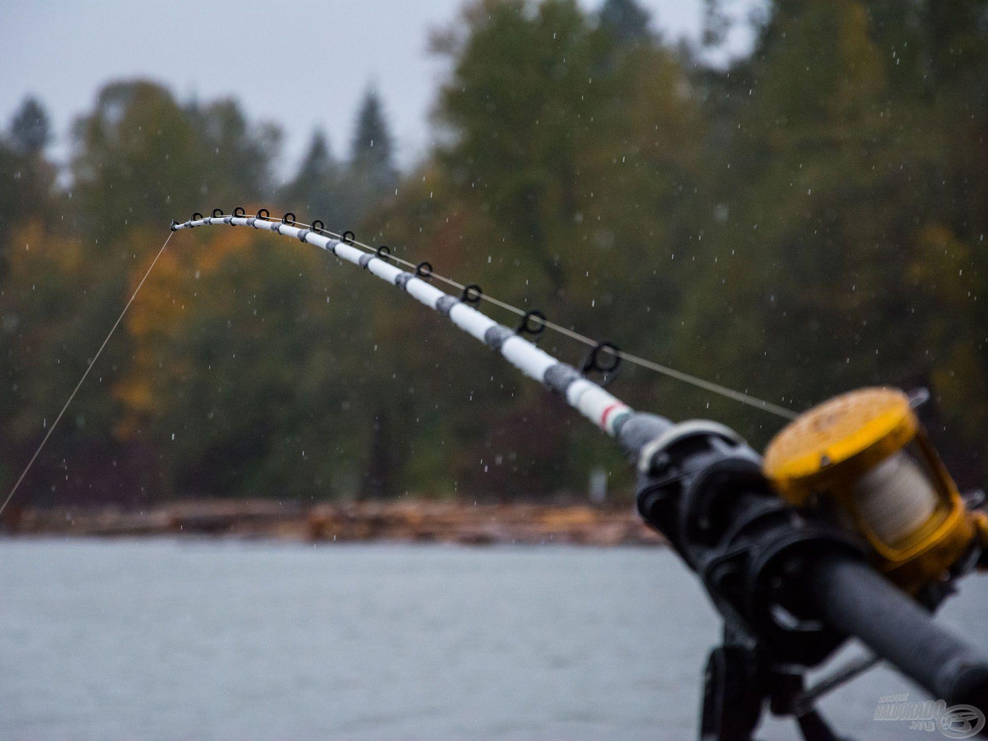 Eső… eső… eső -> no meg sok hal!