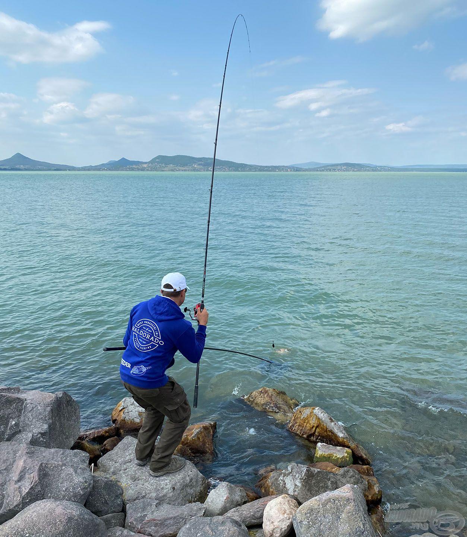 A hosszú bottal könnyedén lehetett a partszéli, sekélyebb vízben is iránytani a halakat, és a hosszú nyelű merítővel biztonságosan tudtam őket megszákolni