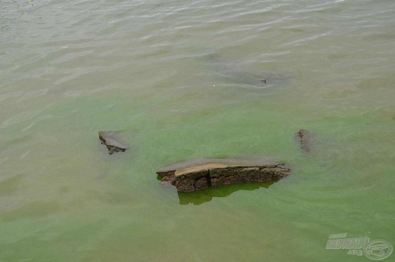 """Amikor megállt szél, a zöldalga megjelent a víztetőn és egyre sűrűbb lett. Ez a halak egyik természetes tápláléka és """"árnyékolója"""" is egyben"""