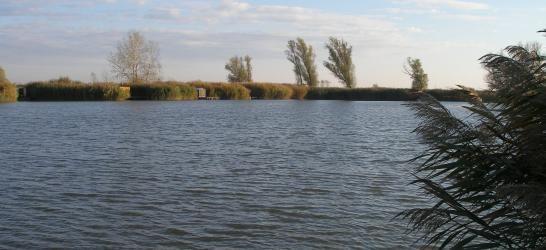 Bácsbokodi Horgásztó (Alsó-tó)