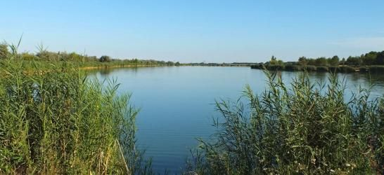 Fás tó  -  Békéscsaba