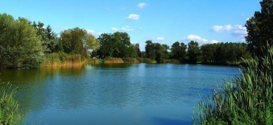 Harangozó tó